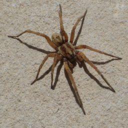 Уничтожение пауков в Зеленогорске